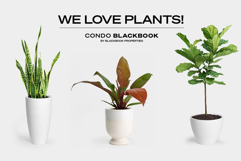 We Love Plants! These are the Best Indoor Plants for Condo Living